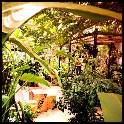 Tranquil garden oasis.