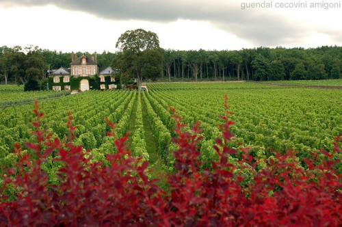 Burgundy Wine Vineyard by Guendal Cecovini Amigoni